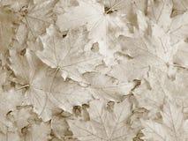 Fond de feuilles de chute/automne - photos courantes Images stock