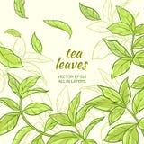Fond de feuilles de thé Illustration Libre de Droits