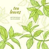 Fond de feuilles de thé Images stock