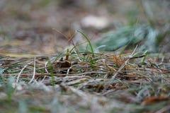 Fond de fines herbes diffus image libre de droits