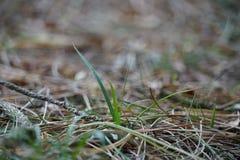 Fond de fines herbes diffus images stock