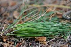 Fond de fines herbes diffus photo stock