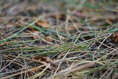 Fond de fines herbes diffus image stock