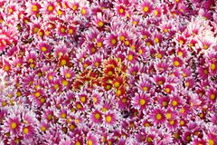 Fond de fleur Images libres de droits