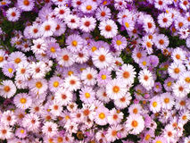 Fond de fleur Photographie stock libre de droits