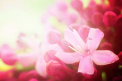 Fond de fleur image stock