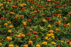 Fond de fleur Abeilles et fleur jaune et orange photos libres de droits