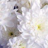 Fond de fleur blanche Photographie stock libre de droits