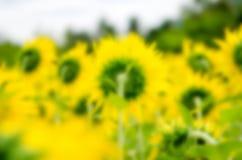 Fond de fleur brouillé par abstrait Photo libre de droits