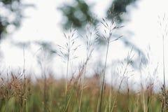 Fond de fleur d'herbe Photographie stock