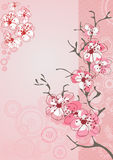 Fond de fleur de cerise Photos stock