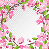Fond de fleur de cerise Photo libre de droits