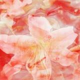 Fond de fleur de couleur d'eau Image libre de droits