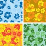 Fond de fleur de ketmie Photographie stock libre de droits