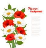 Fond de fleur de nature avec les pavots rouges et les marguerites blanches Photos stock