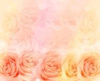 Fond de fleur de Rose Photos libres de droits