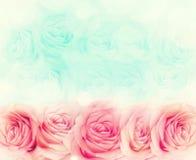 Fond de fleur de Rose Images libres de droits