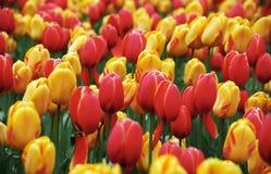 Fond de fleur de source Photos stock