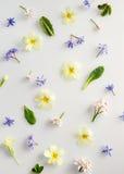 Fond de fleur de source Images libres de droits