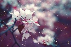 Fond de fleur de ressort avec le foyer mou photo libre de droits