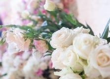 Fond de fleur Roses fraîches blanches, foyer mou Photographie stock libre de droits