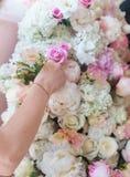 Fond de fleur Roses fraîches blanches, foyer mou Images stock