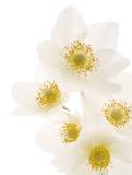 Fond de fleurs blanches Photos libres de droits
