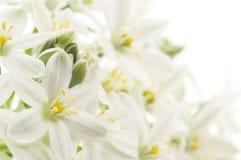 Fond de fleurs blanches Photo stock