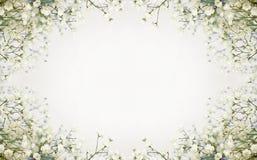 Fond de fleurs blanches Photographie stock