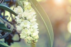 Fond de fleurs d'orchidées et de feuilles de vert Photos libres de droits
