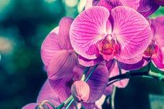 Fond de fleurs d'orchidées et de feuilles de vert dans le jardin Photo stock