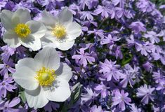 Fond de fleurs dans le jardin image libre de droits