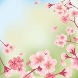 Fond de fleurs de cerise illustration libre de droits