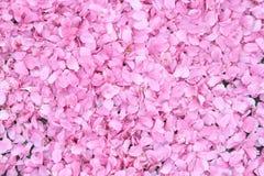 Fond de fleurs de cerisier Photos stock