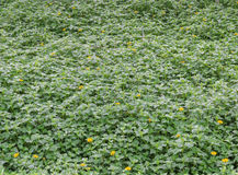 Fond de fleurs de plante verte et de jaune Image libre de droits