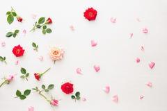 Fond de fleurs et de pétales Photographie stock libre de droits