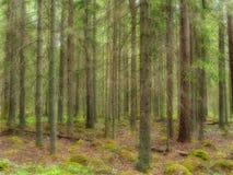 Fond de forêt Photo stock