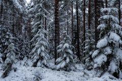 Fond de forêt dans le temps de Noël Photo stock