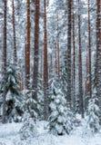 Fond de forêt dans le temps de Noël Photos libres de droits