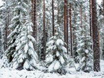 Fond de forêt dans le temps de Noël Photo libre de droits