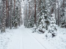 Fond de forêt dans le temps de Noël Image stock