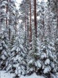 Fond de forêt dans le temps de Noël Photographie stock libre de droits
