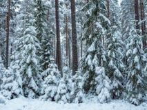 Fond de forêt dans le temps de Noël Images libres de droits