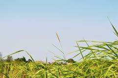 FOND DE FORÊT DE VERDURE DE BEAUTÉ DE NATURE Photo stock