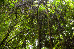 Fond de forêt tropicale Photos stock
