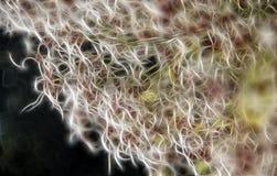 Fond de fractale des fleurs de clématite image stock