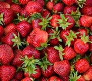 Fond de fraise de baies Image libre de droits