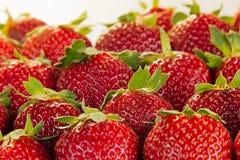 Fond de fraise des fraises entières au soleil Fraises mûres colorées de baies Fond de fruit Bagout de fraise Image stock