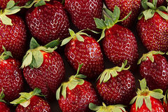Fond de fraise des fraises entières Fraises mûres colorées Fond de fruit Fraise sans joint Ressort, CCB d'été Image libre de droits