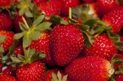 Fond de fraises Images stock